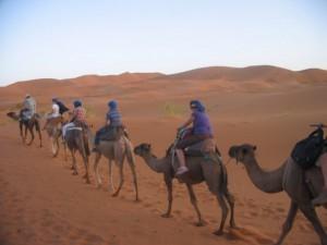 Desert Camel trek